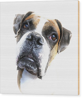 Boxer Expression Wood Print by Susan Leggett