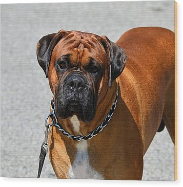 Boxer Wood Print by Kathy Eickenberg