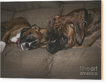 Boxers At Rest Wood Print by Suzi Nelson