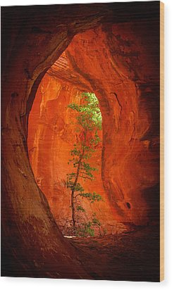 Boynton Canyon 04-343 Wood Print