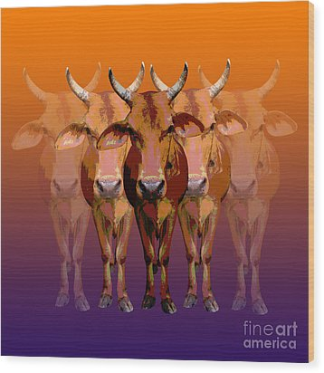 Brahman Cow Wood Print