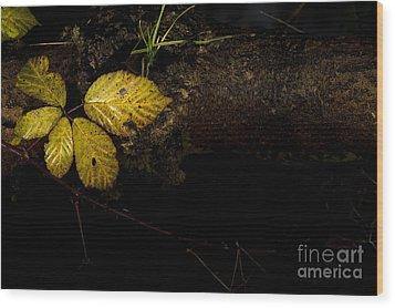 Bramble Tree Wood Print by Anne Gilbert