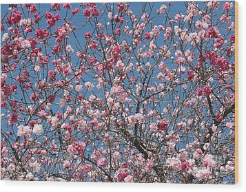 Branches And Blossoms Wood Print by Carol Groenen