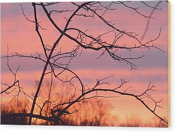 Wood Print featuring the photograph Branches Meet The Sky by Dacia Doroff