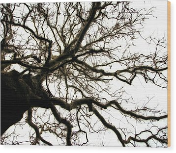 Branches Wood Print by Michelle Calkins