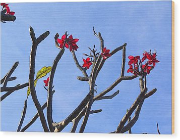Branches Of Beauty Wood Print by Denise Darby