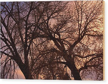 Branching Out At Sunset Wood Print by James BO  Insogna