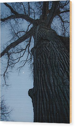 Branching Out Wood Print