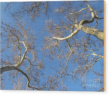 Branching Out Wood Print by Melissa Stinson-Borg