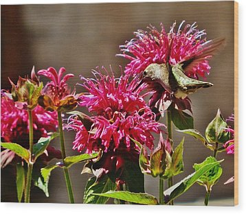 Wood Print featuring the photograph Breakfast At The Bee Balm by VLee Watson