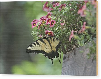 Breakfast At The Windowbox Wood Print