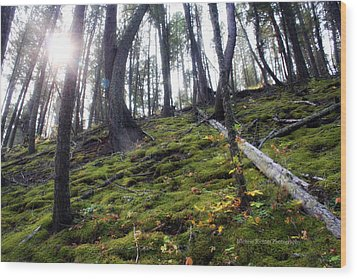 Breaking Through Wood Print by Michele Richter