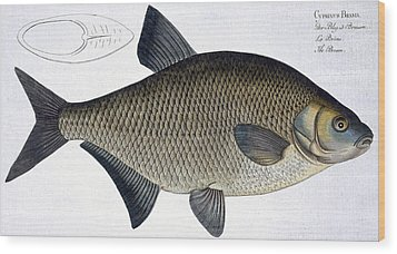 Bream Wood Print by Andreas Ludwig Kruger