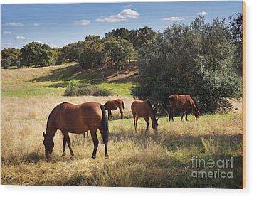 Breed Of Horses Wood Print by Carlos Caetano