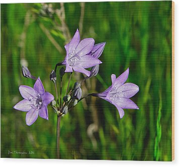 Wood Print featuring the photograph Bridges' Triteleia by Jim Thompson