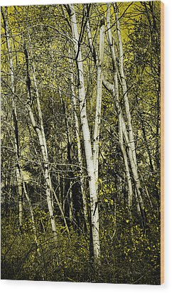 Briers And Brambles Wood Print by Luke Moore