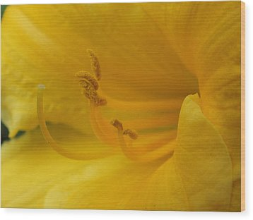 Wood Print featuring the photograph Bright And Yellow by Gene Cyr