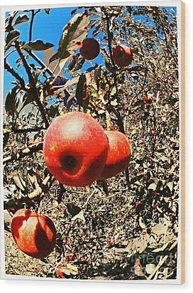Bright Apples Wood Print by Garren Zanker