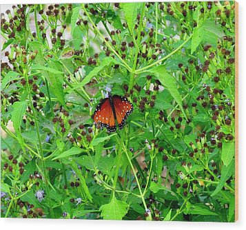 Bright Butterfly Wood Print by David  Norman
