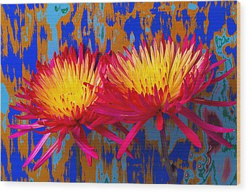 Bright Colorful Mums Wood Print by Garry Gay