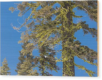 Wood Print featuring the photograph Bright Lichen by Jan Davies