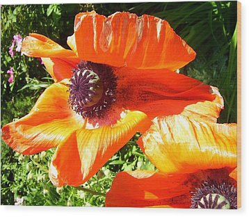 Bright Orange Poppy Wood Print by Kristine Bogdanovich
