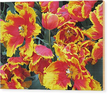 Bright Parrot Tulips Wood Print by Gerry Bates