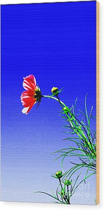 Bright Pink Bloom Wood Print by Tina M Wenger