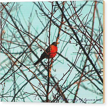 Bright Red Robin Wood Print by Gena Weiser
