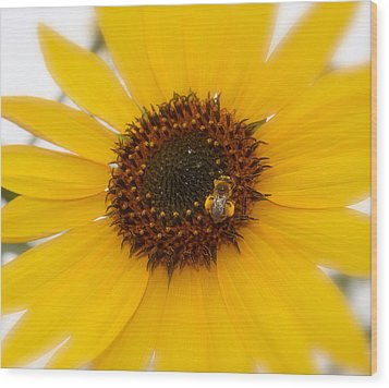 Wood Print featuring the photograph Vibrant Bright Yellow Sunflower With Honey Bee  by Jerry Cowart
