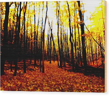 Bright Woods Wood Print