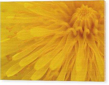 Bright Yellow Dandelion Flower Wood Print by Natalie Kinnear
