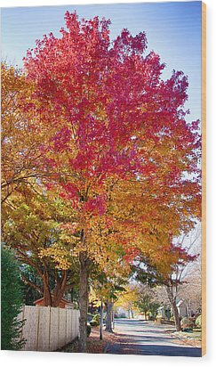 brilliant autumn colors on a Marblehead street Wood Print