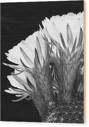 Brilliant Blossoms Diptych Left Wood Print by Kelley King