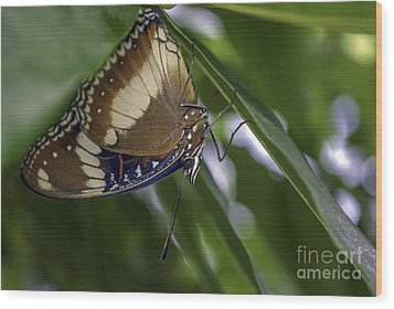 Brilliant Butterfly Wood Print