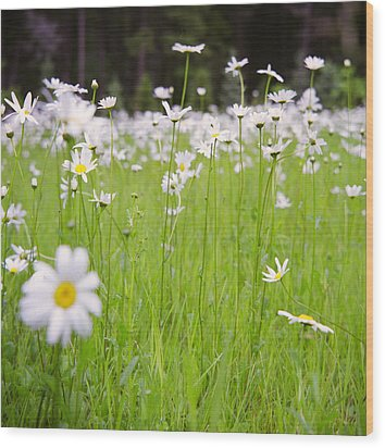 Brilliant Daisies Wood Print