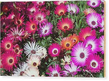 Wood Print featuring the photograph Brilliant Flowers by Chalet Roome-Rigdon