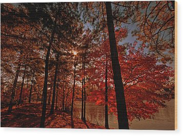 Wood Print featuring the photograph Brilliant Shade by John Harding