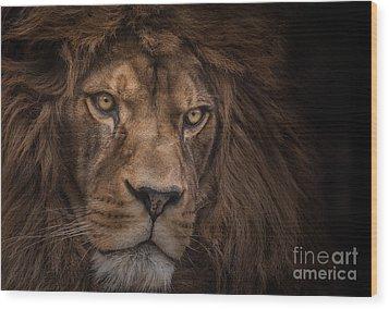 Brink Of Extinction Wood Print by Ashley Vincent
