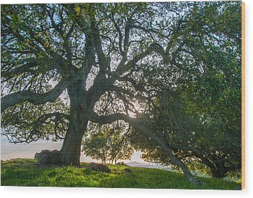 Briones Oak Wood Print