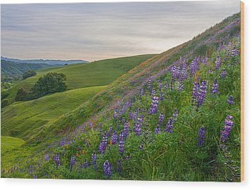 Briones Wildflowers Wood Print