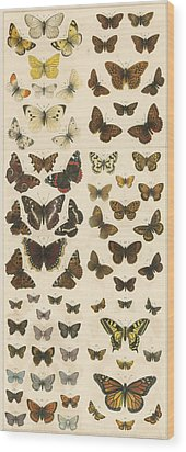 British Butterflies Wood Print by English School