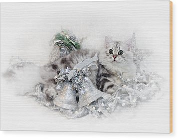 British Longhair Cat Christmas Time Wood Print by Melanie Viola