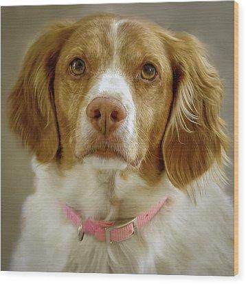Brittany Portrait Wood Print