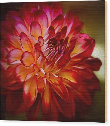 Brittany Red Dahlia Wood Print