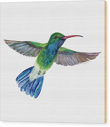 Broadbilled Fan Tail Hummingbird Wood Print by Amy Kirkpatrick