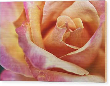 Wood Print featuring the photograph Broadway Hybrid Tea Rose by Jason Politte
