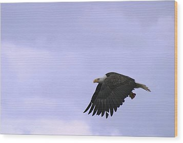 Broken Feather Eagle Wood Print by Kym Backland