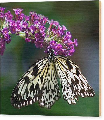 Broken Wing Of Black And White On Purple Wood Print by Karen Stephenson