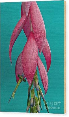 Bromelia Bilbergia Windii Wood Print by Heiko Koehrer-Wagner